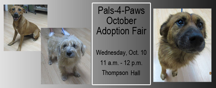 Pals-4-Paws October Adoption Fair