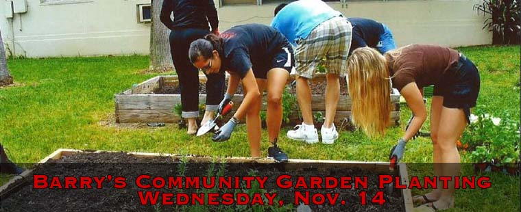 Barry's Community Garden Planting - November 14