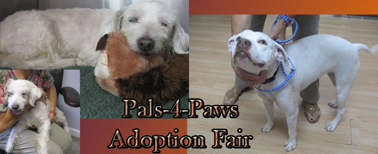 Pals-4-Paws December Adoption Fair