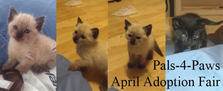 Pals-4-Paws April Adoption Fair
