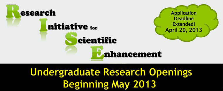 RISE undergraduate research openings