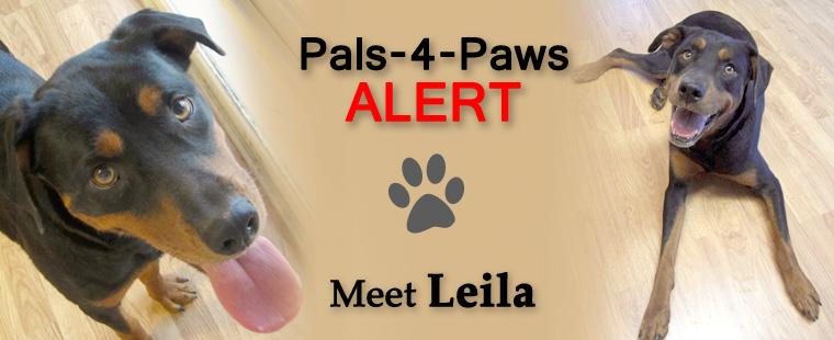 Pals-4-Paws Alert