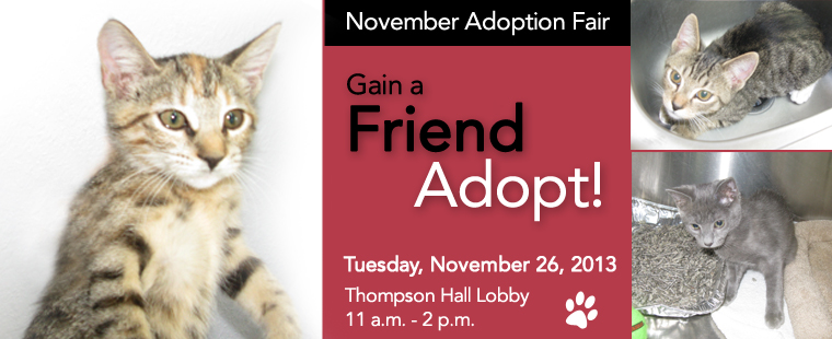 Pals-4-Paws Adoption Fair November