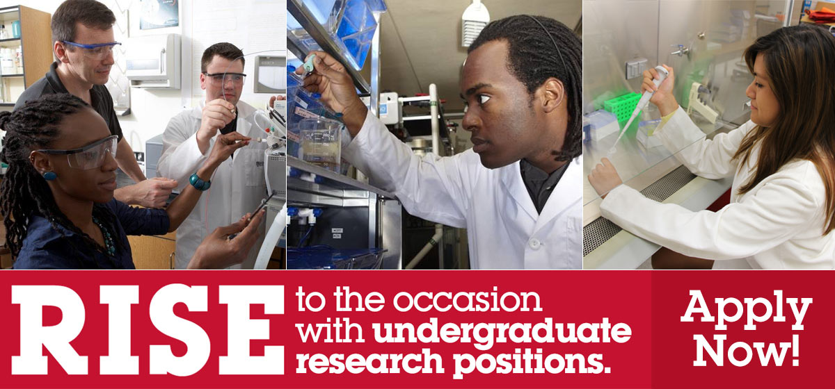 Undergraduate Research Positions