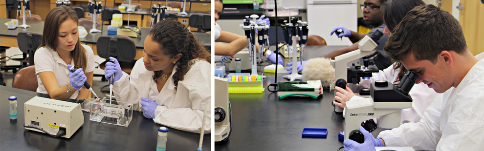 Biology (BS) Pre-Medical : Biology : College of Arts and